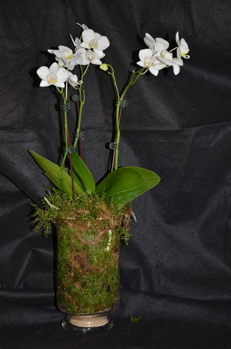 top 28 why are my orchid flowers falling fall leaves