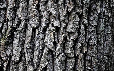wallpaper grey trees tree bark wallpaper wallpapersafari
