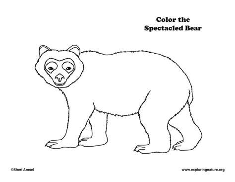 spectacled bear coloring page 77 spectacled andean bear for coloring page click