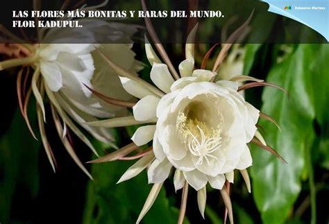 imágenes raras pero bonitas las 10 flores mas bonitas y raras del mundo piedra