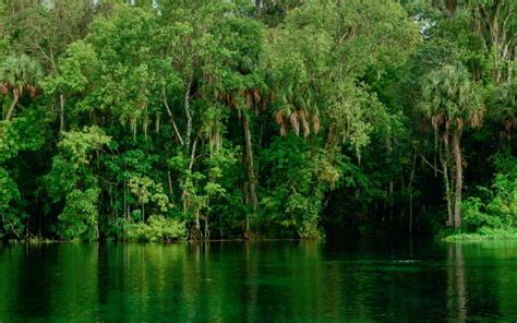 Sweetwater Cabin Ocala National Forest by Ocala National Forest Squatters Pictures To Pin On