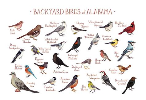 alabama backyard birds field guide art print watercolor
