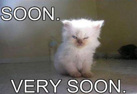 Soon Cat Meme - soon meme collection 17 pics izismile com