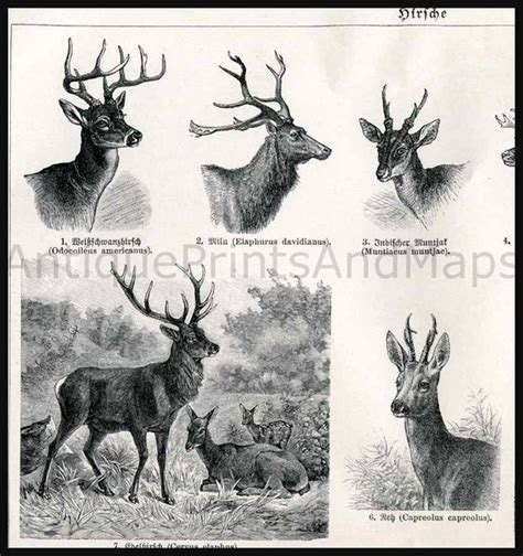 printable reindeer tails white tail elk and moose on pinterest