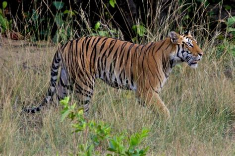 Best National Parks by The Best 5 National Parks For India Wildlife Tour