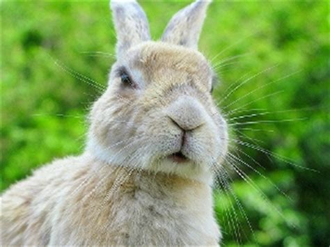 what do whiskers do for a image gallery rabbit