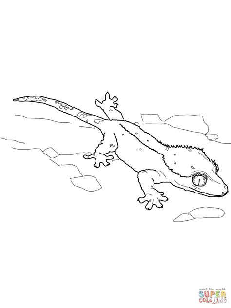 crested gecko coloring page free printable coloring pages