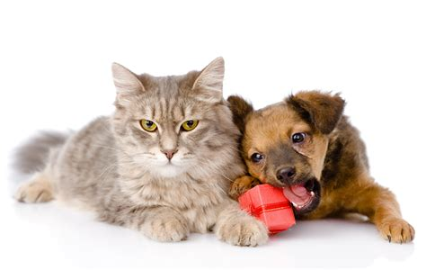 wallpaper cat and dog hd cat dog 4k ultra hd wallpaper and background 4000x2540