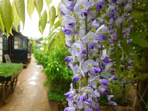 piante da giardino ombra piante da giardino ombra idea creativa della casa e dell