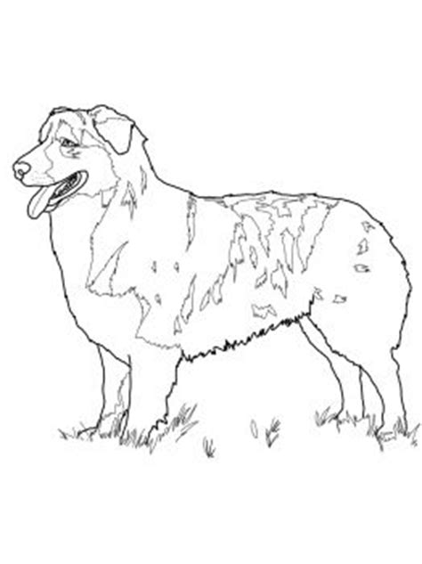 australian shepherd coloring pages printable dog breeds