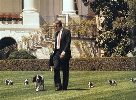 presidential dogs president george h w bush s millie presidential pet museum