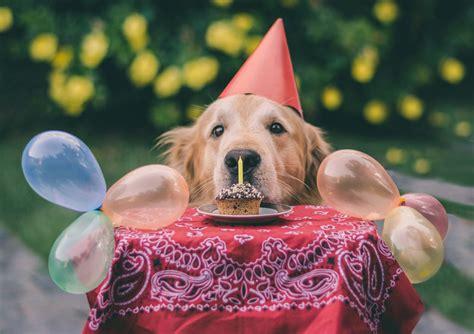 happy birthday golden retriever birthday golden retriever puppy golden retriever puppy car pictures