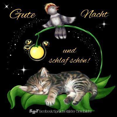 Gute Nacht Katzen Bilder by Die 255 Besten Bilder Zu Gute Nacht Auf