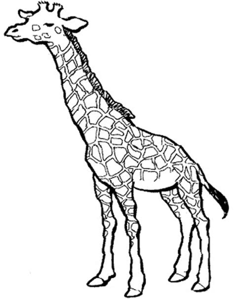 Coloring Pages for Kids: Giraffe Coloring Pages for Kids