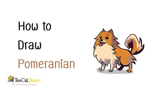 how to pomeranian dogs how to draw a pomeranian breeds picture