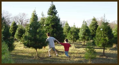 awesome picture of east texas christmas tree farms