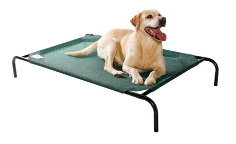 coolaroo elevated pet bed top 6 best dog beds for large dogs orthopedic comfy beds animallama