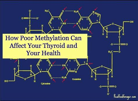 Does Detox Affect Thyroid by 193 Best Mthfr Gene Mutation Images On
