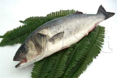 fish pescado serpeska grupo mozos comercializaci 243 n y distribuci 243 n de pescado y marisco fresco y congelado