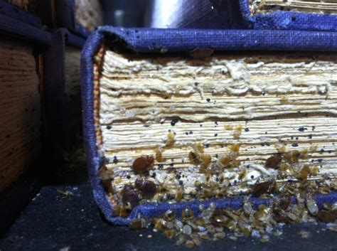 Can Bed Bugs Live In Books by Bed Bugs Detected In Warren Library Forced Shut Of