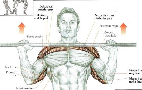 muscle groups used in bench press bench press and inclines which one and why far beyond