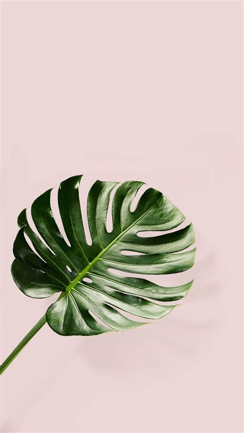 banana palm wallpaper tumblr tumblr iphone palm leaf pink backround wallpaper