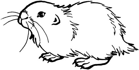 Prairie Coloring Pages Coloring Pages Prairie Coloring Page