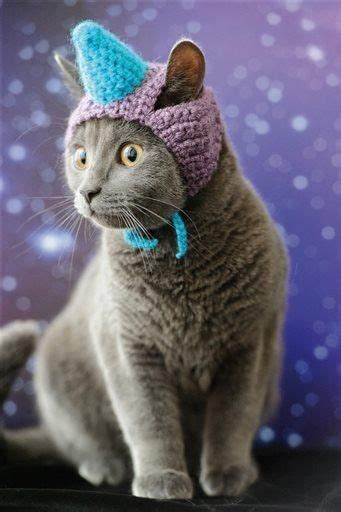 caticorns images  pinterest