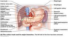 gas exchange isap 100 2014 pinterest stages of bone growth isap 100 2014 pinterest