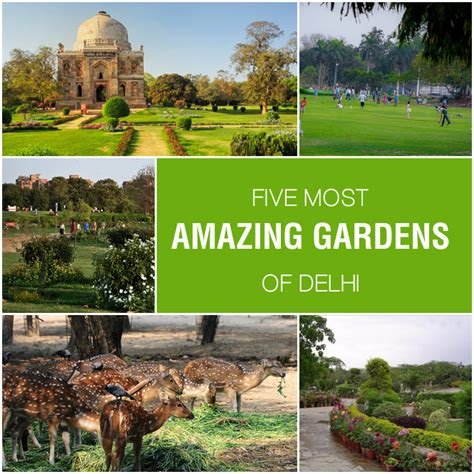 Delhi Garden five most amazing gardens of delhi india