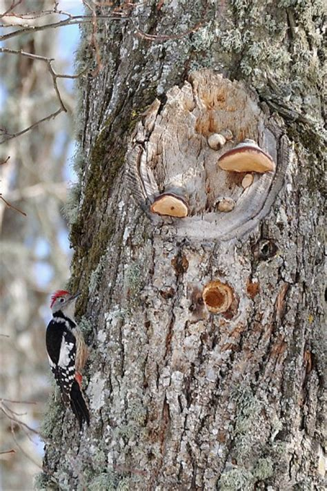Do When You Build A Nest by Woodpeckers Building Nests Looduskalender Ee