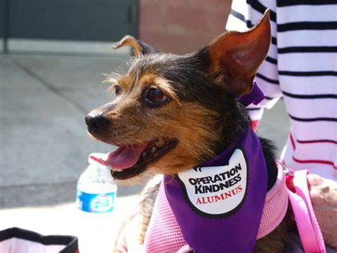 operation kindness dogs dallas sanctuary ensures animals get a second chance at a happy culturemap dallas