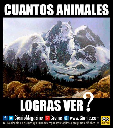 imagenes de juegos mentales para facebook 191 cuantos animales logras ver juegos mentales