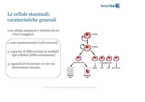 banche cellule staminali cellule staminali cordone ombelicale biotech sol