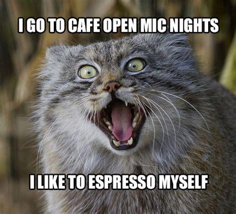 10 Pallas's Cats Tell Coffee Puns