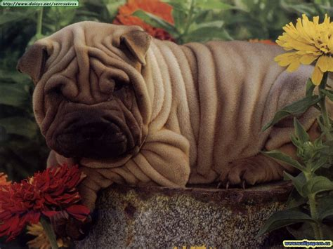 Imagenes Animales Bellos | los animales mas bellos del mundo wallpapers taringa
