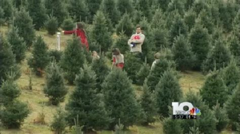 christmas tree farm owner provides tips and tricks to pick