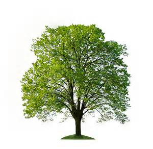 meaning of trees meaning of tree
