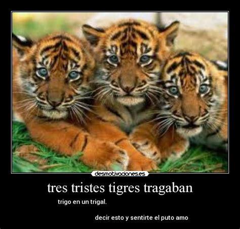 imagenes de tres tristes tigres tres tristes tigres tragaban desmotivaciones