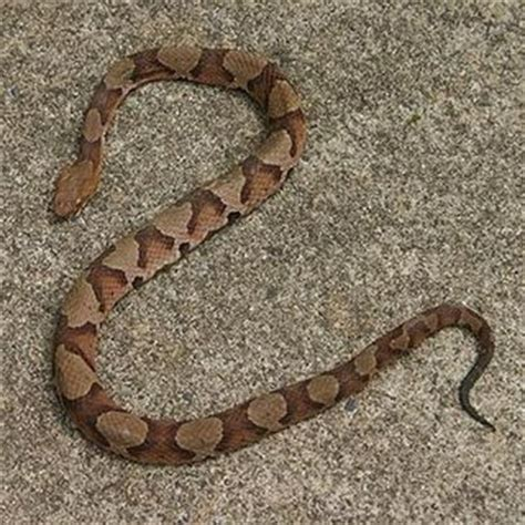 Found A Snake In Backyard by Cats And Crafts Snakes
