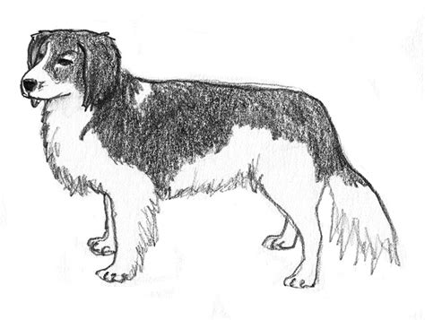 drawings of dogs sketches pencil drawings of dogs