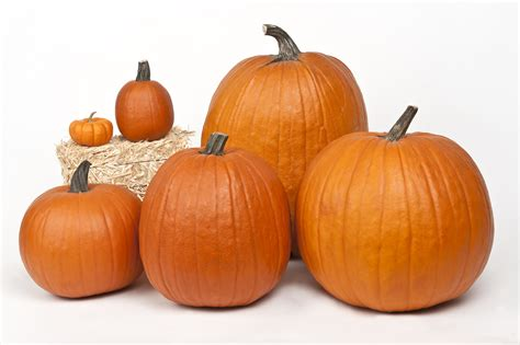 related keywords suggestions for pumpkins