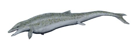 Whale by File Dorudon Cropped Png Wikimedia Commons