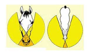 are horses color blind archive horses comparative physiology of vision