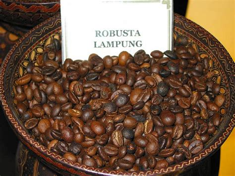 Black Coffee Robusta Roasted arabica vs robusta coffee beans guide 2 coffee
