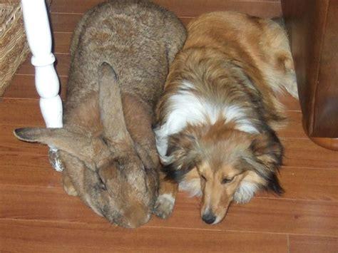 rabbit dogs scientific scribbles 187 melbourne science communication students ponder