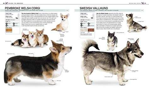 breed book all breeds a to z room ideas
