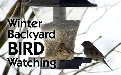 backyard bird watcher winter backyard bird watching archives the old schoolhouse