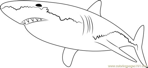 great white shark coloring pages pictures to pin on