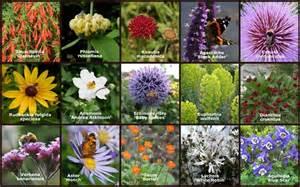 Bee Garden Flowers 15 Bee Friendly Garden Plants Plants To Plant Direct From Plantstoplant